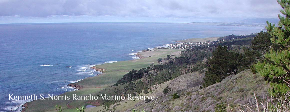 Rancho Marino Panoramic View of coast and waves